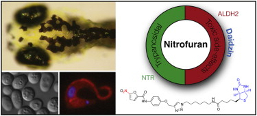 Nitrofurans