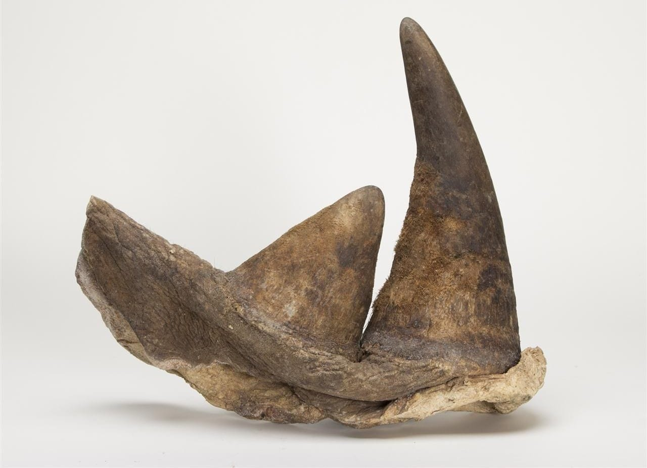 Rhino-horn-viagra-canadian-mall