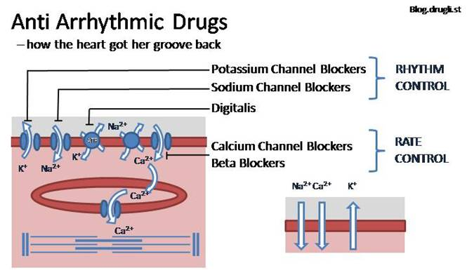 Cardiovascular drugs - Antiarrhythmics
