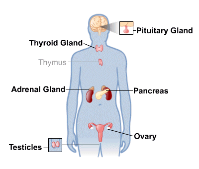 Effects of endocrine treatment